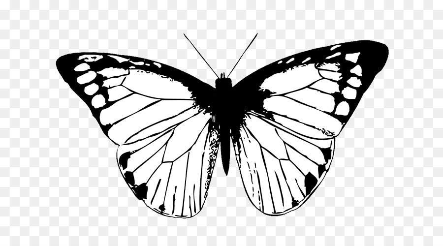 La mariposa monarca Dibujo Clip art - mariposa blanca png dibujo ...