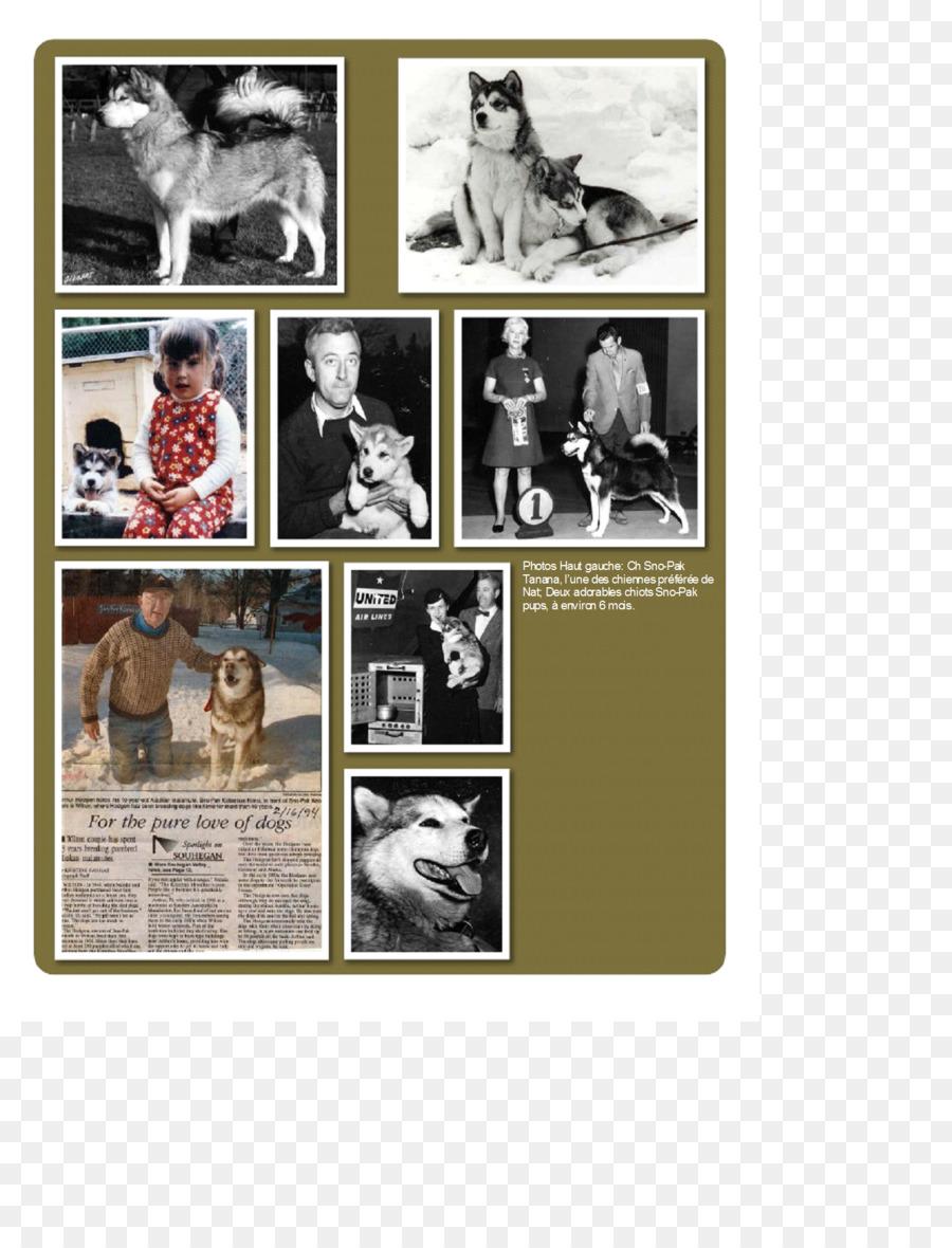Collage Cartel - collage Formatos De Archivo De Imagen - 1494*1933 ...