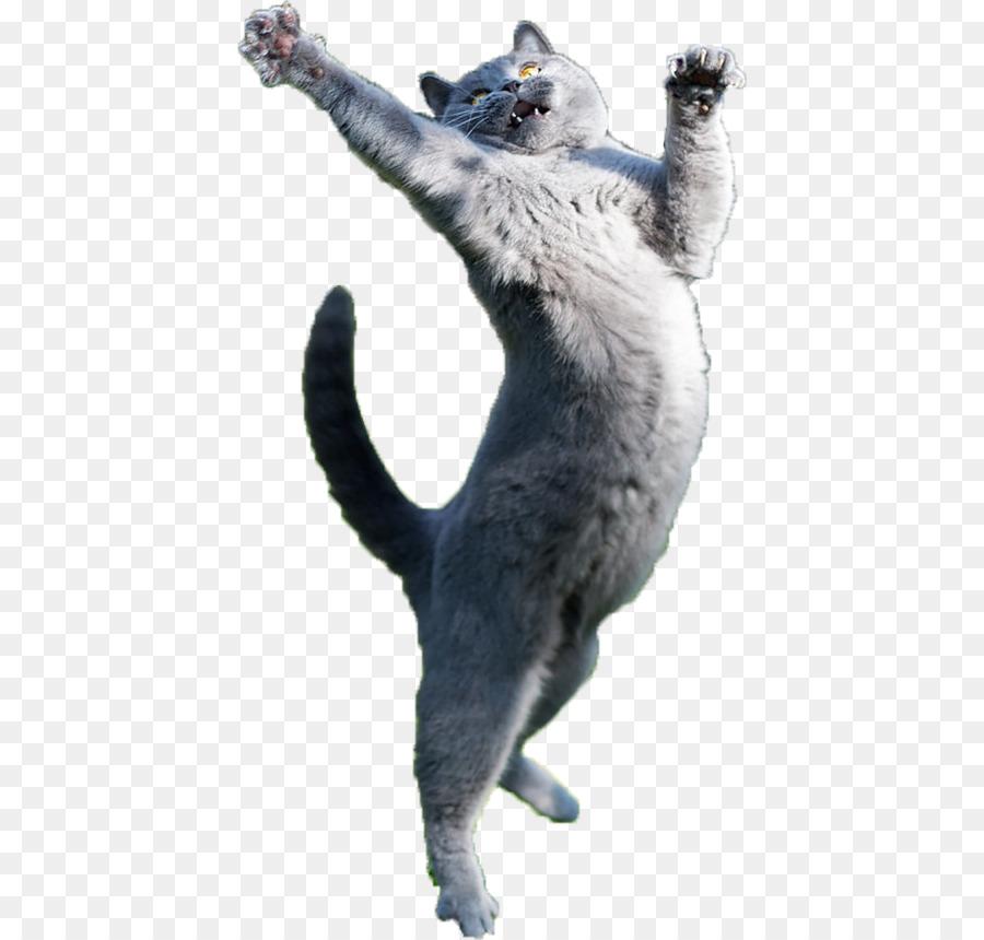 Gato Perro Mascota Gatito - color gatito png dibujo - Transparente ...