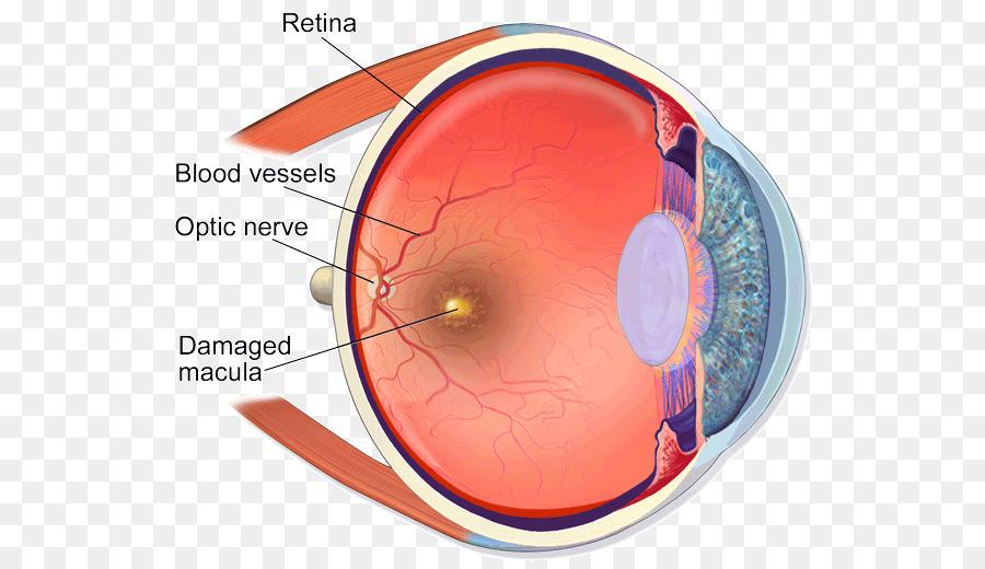 Ojo humano, la Anatomía del cuerpo Humano Retina - Ojo png dibujo ...