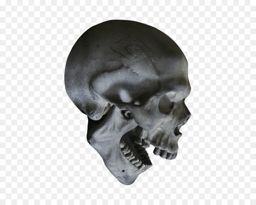 Cráneo humano simbolismo Esqueleto de la anatomía Humana - esqueleto ...