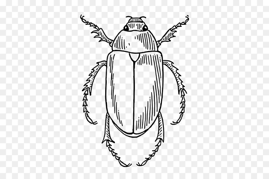 Escarabajo libro para Colorear, Dibujo de Clip art - escarabajo ...