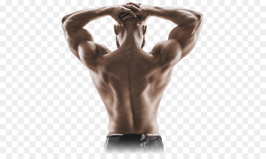 Muscle contraction Human back Shoulder Arm - Muscular Body png ...