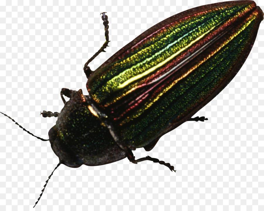 Escarabajo Picudo de la Araña Clip art - escarabajo Formatos De ...