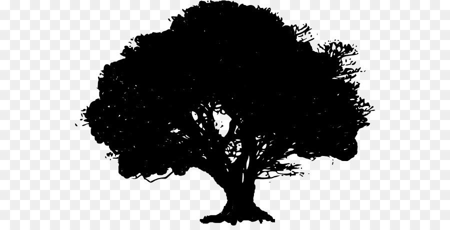 Tree Drawing Water Oak Clip Art Oak Tree Clipart Png Download