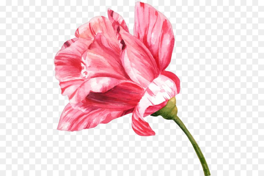 Flores Png Desenho Aquarela