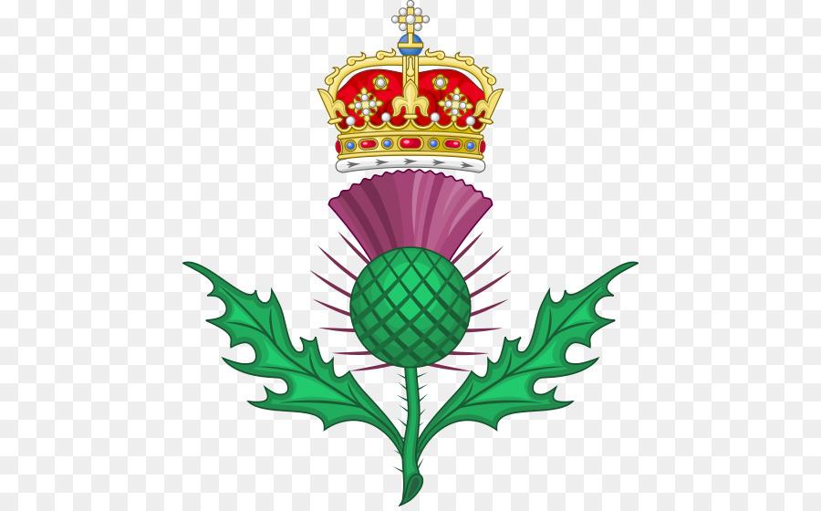 Thistle Botanical Illustration United Kingdom National Symbols Of