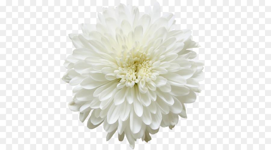 Libro para colorear Mamá & Mini Infantil - flor blanca png dibujo ...