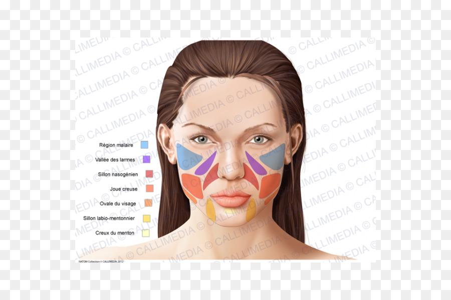 Anatomía humana Nariz Barbilla hueso Cigomático - nariz Formatos De ...