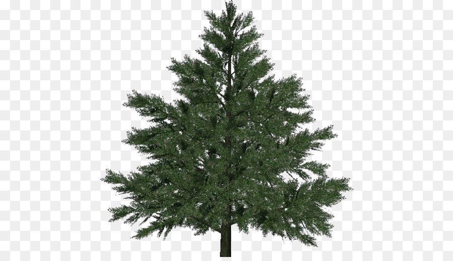 pine larch norway spruce christmas tree christmas tree