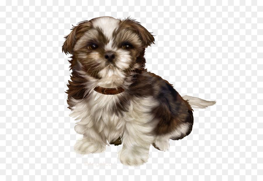 Morkie Puppy Schnoodle Little Lion Dog Shih Tzu Puppy Png Download