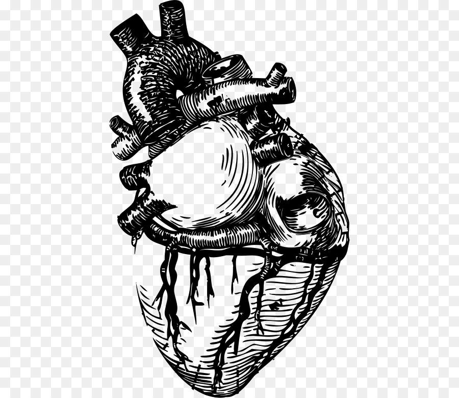 Línea del corazón del arte de la Anatomía Clip art - corazón ...