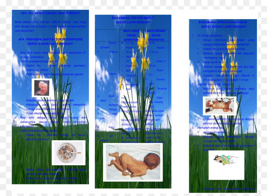 Majorelle Blue Majorelle Garden Picture Frames Organism - leaflet ...