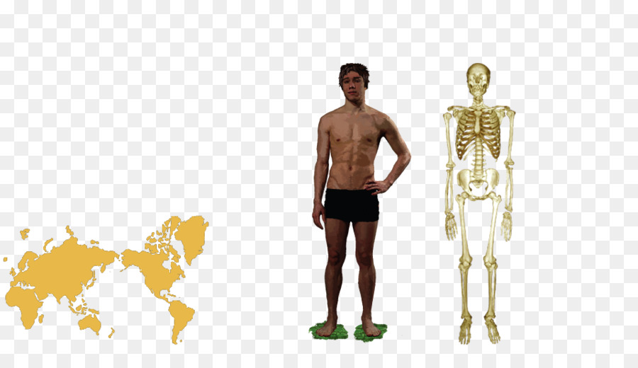 Homo Sapiens Human Anatomy Human Body Human Behavior Human Body