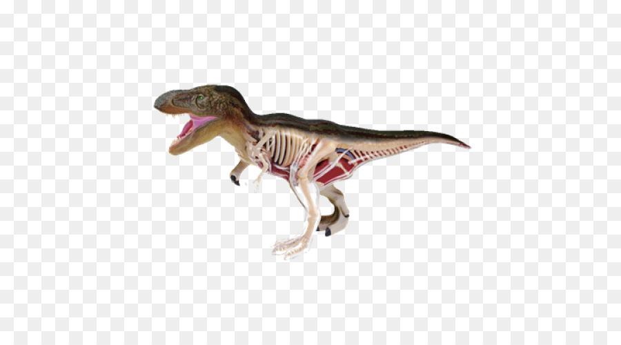 Tyrannosaurus Shark anatomy Shark anatomy Dinosaur - shark png ...