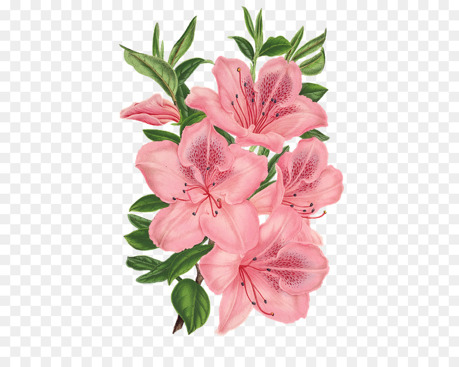 Pink bunch drawing pink flowers flower png download 478720 pink bunch drawing pink flowers flower mightylinksfo