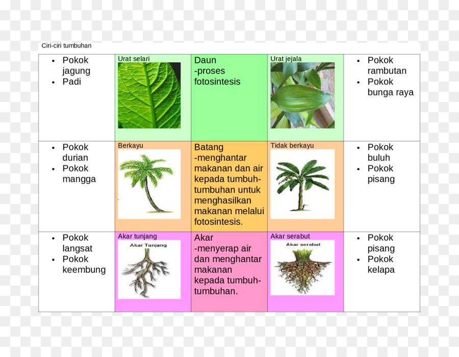 Leaf Diagram Brand Tree Leaf Png Download 22001700 Free