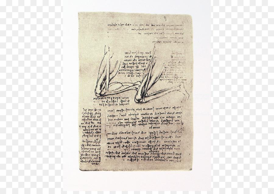 Papel - Anatomía Formatos De Archivo De Imagen - 1000*700 - Gratis ...