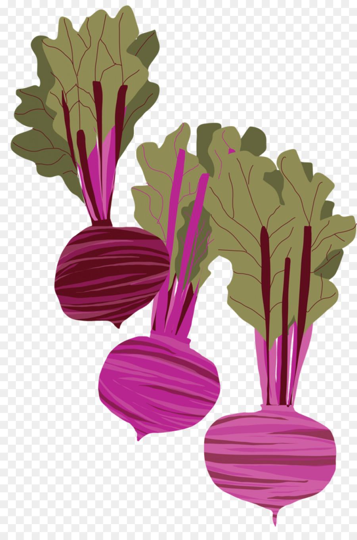 Beetroot Drawing Root Vegetables Vegetable Png Download 937 1405