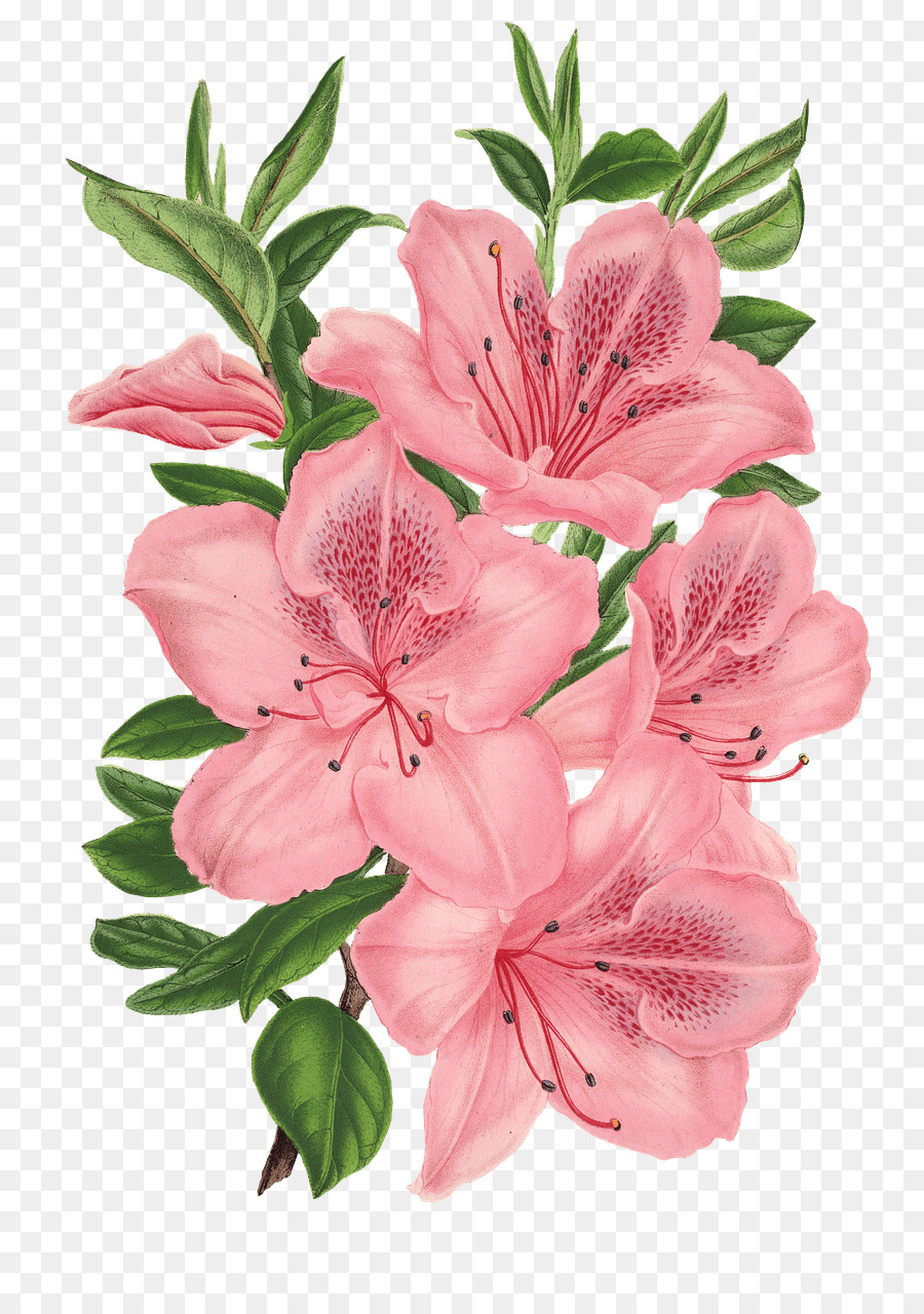 Pink bunch drawing pink flowers floral design flower png download pink bunch drawing pink flowers floral design flower mightylinksfo