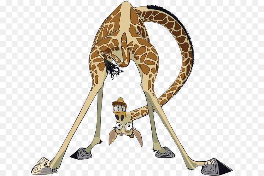 Melman mort northern giraffe madagascar drawing others - Girafe madagascar ...