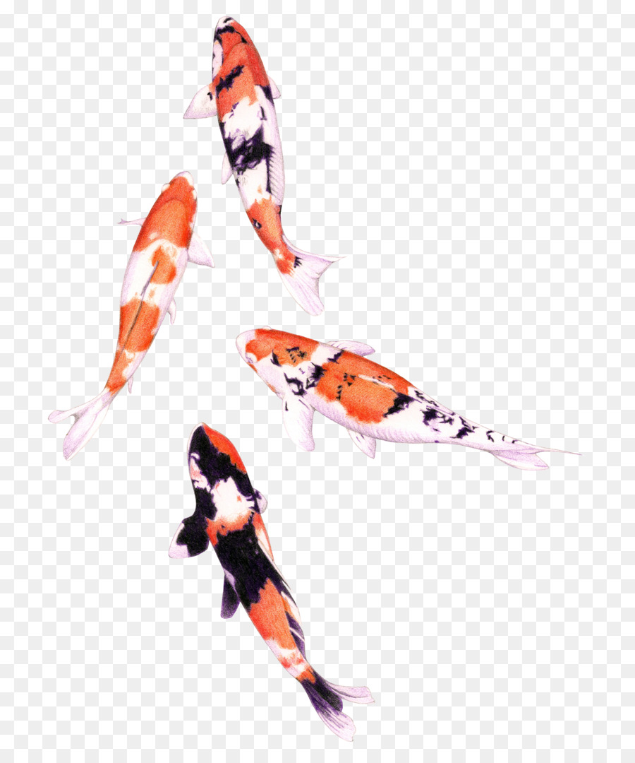 Koi colored pencil drawing png