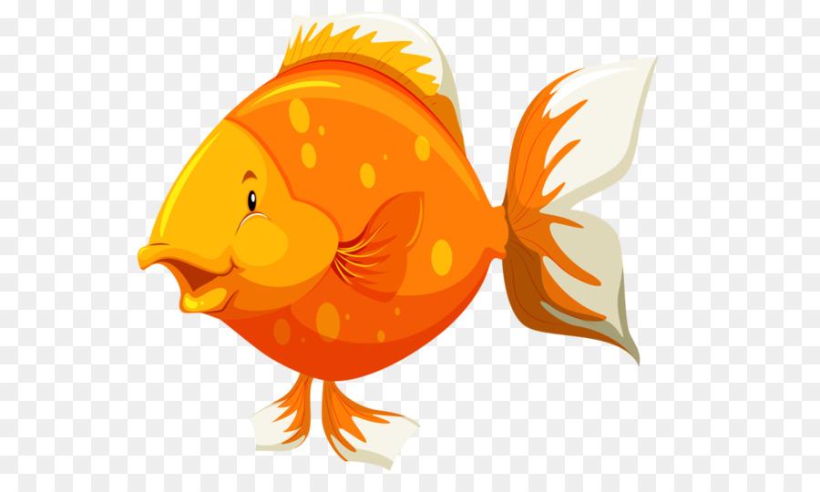 Goldfish Fish Anatomy Fish Png Download 600536 Free