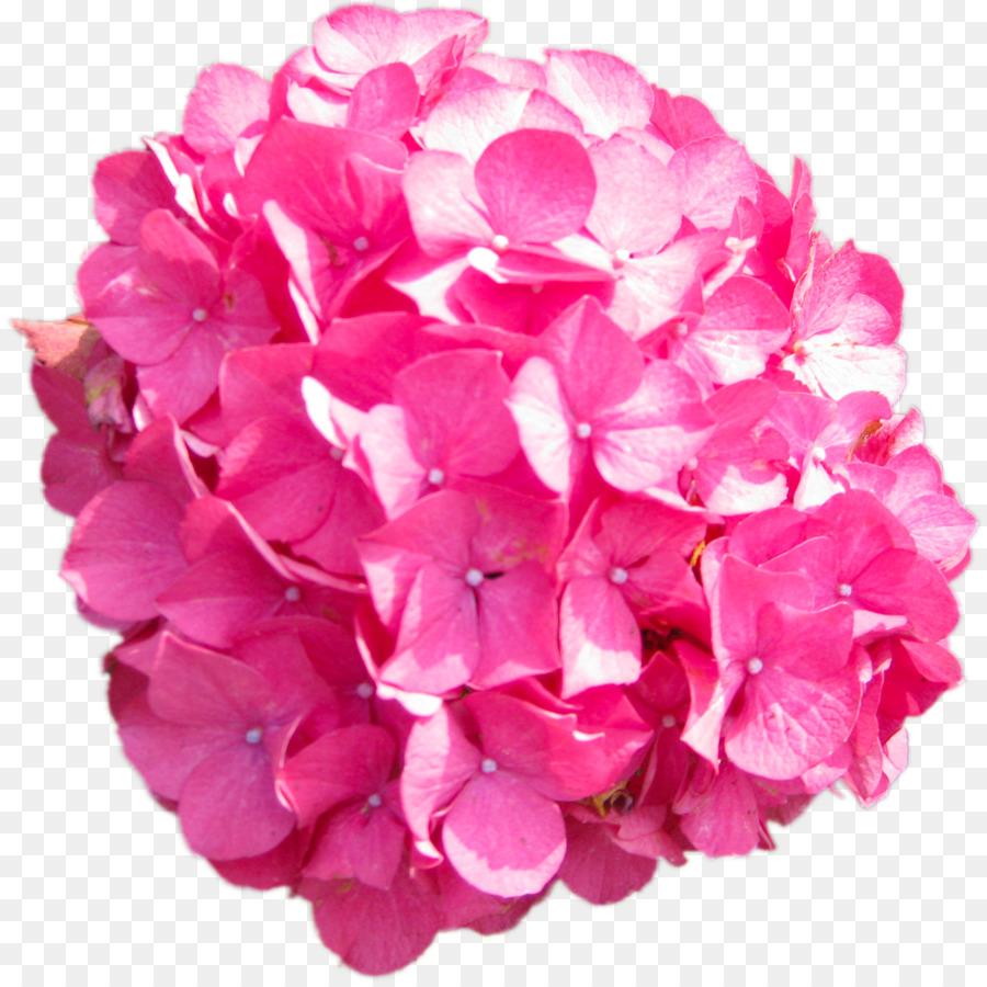 Hydrangea Pink Clip Art Marigold Png Download 11951192 Free