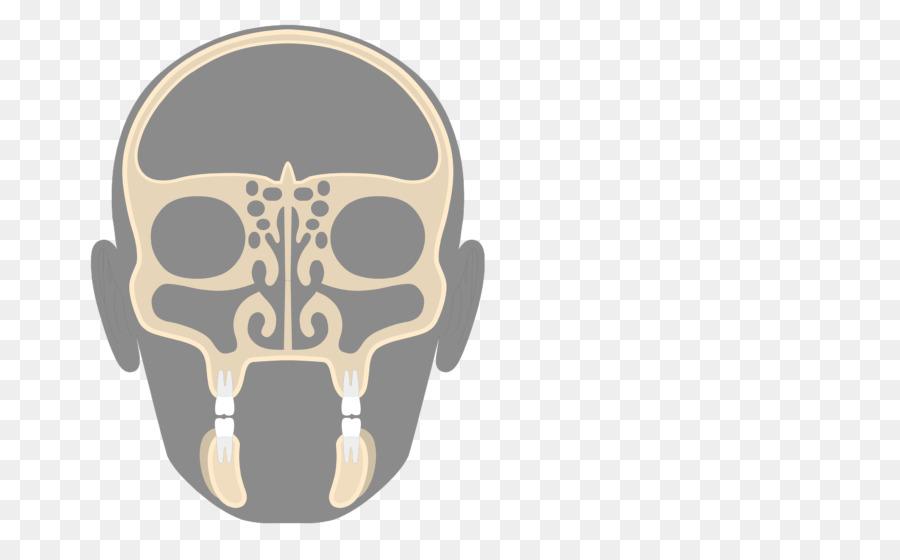 Paranasal sinuses Ethmoid bone Ethmoid sinus Nasal cavity - Nasal ...
