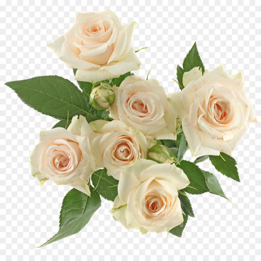 Garden Roses Cabbage Rose Floribunda Floral Design Cut Flowers