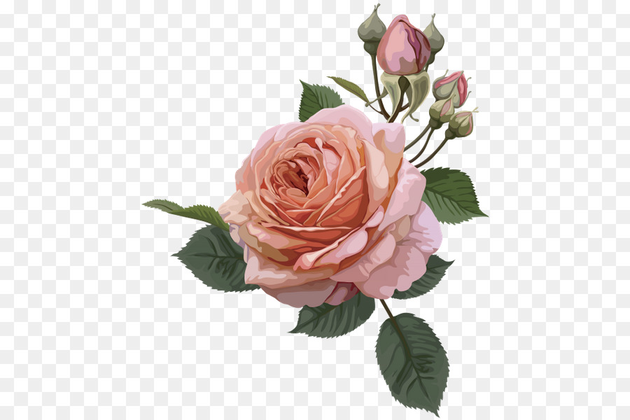 Still Life Pink Roses Vintage Roses Beautiful Varieties For Home