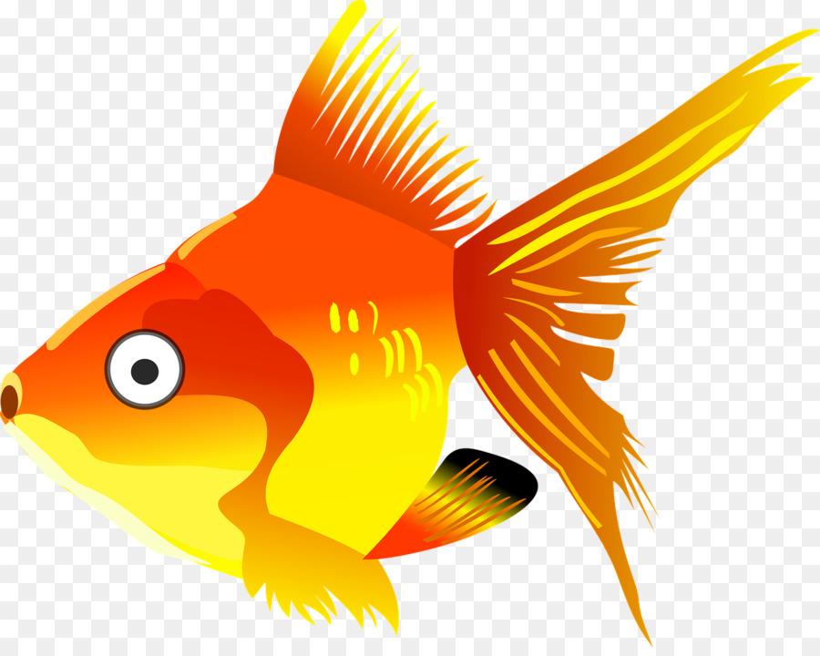 Pez Koi De Dibujos Animados Los Peces Png Dibujo Transparente