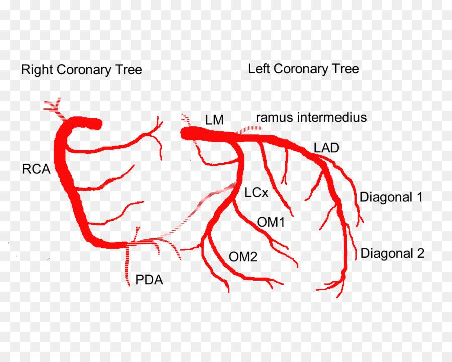 Coronary Arteries Left Coronary Artery Heart Anatomy Heart Png