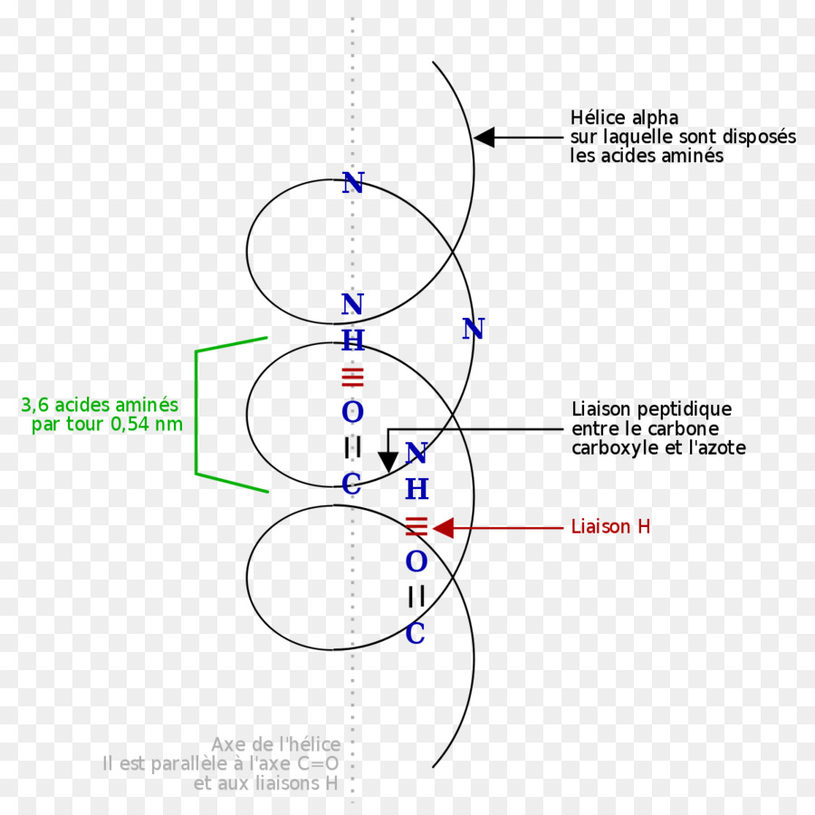 Alpha Helix Diagram Trusted Wiring Diagrams Beta Protein Sheet Amino Acid Tedy Download 1200 Structure