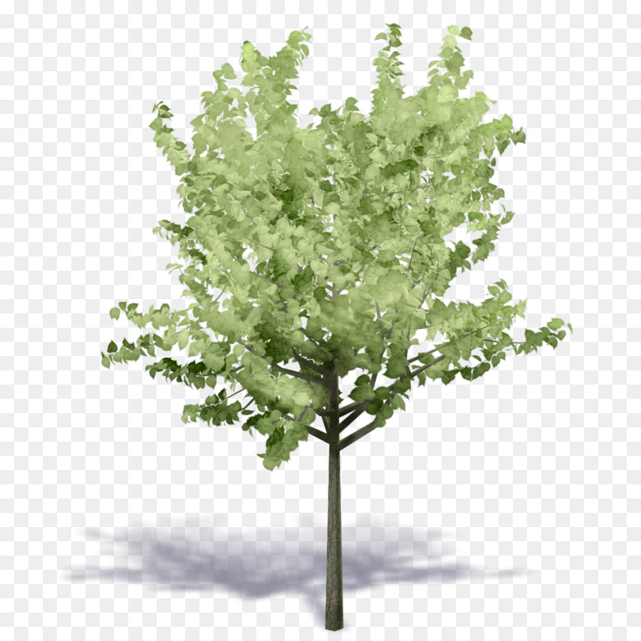 Family Tree Background png download - 1000*1000 - Free Transparent
