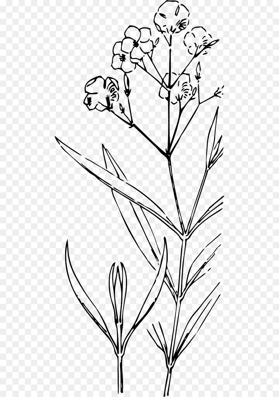 Plant Stem Drawing Flower Painting Flower Png Download 6401280