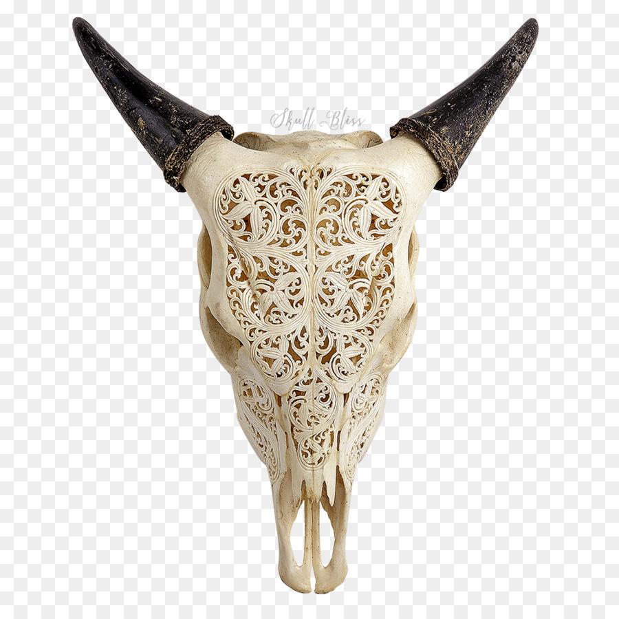 Texas Longhorn los Cráneos de los Animales cráneo Humano - cráneo de ...