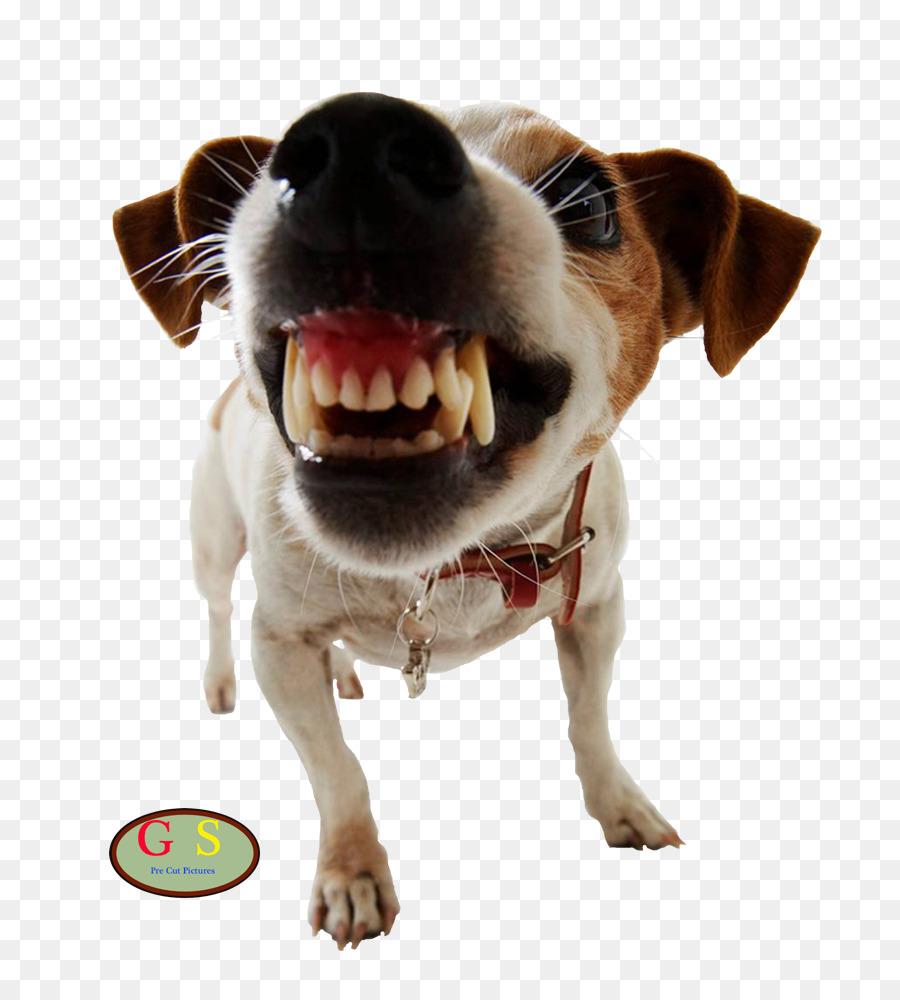 Dog Training Pet Door Dog Aggression Dog Png Download 8001000