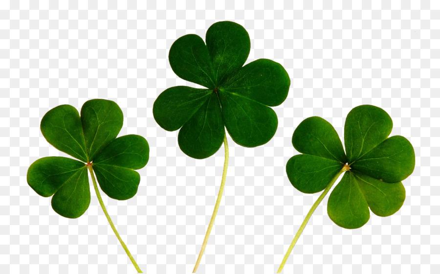 Good Luck Charm Four Leaf Clover Superstition Clover Png Download
