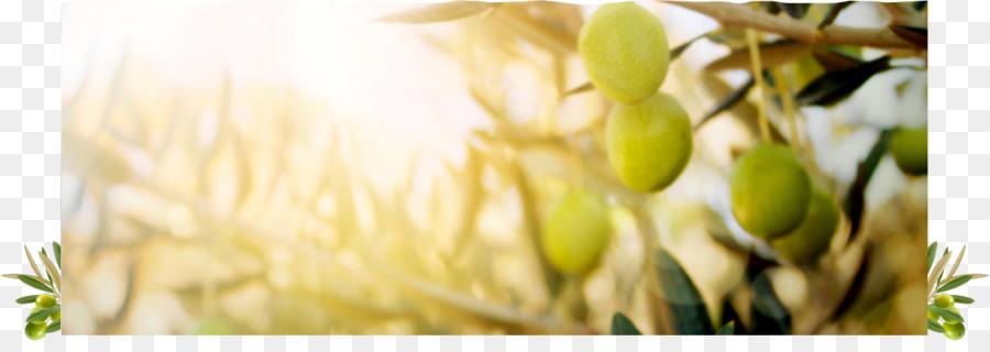 Aceite de oliva de hoja de Olivo Koroneiki cocina griega - La ...
