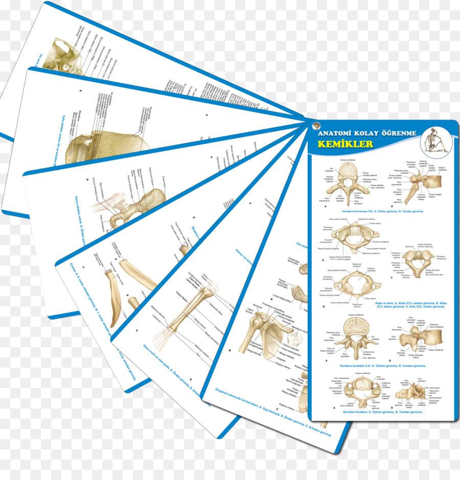 Atlas de Anatomía Humana: Cabeza, Cuello, miembros Superiores, Tórax ...