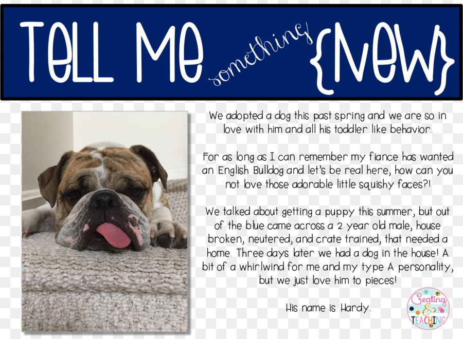 Dog breed Bulldog Puppy Advertising Snout - puppy png download