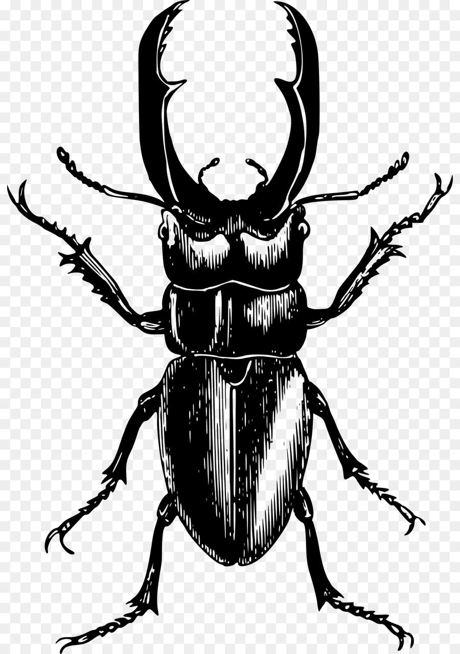 stag beetle clip art beetle download 872 1280 free Rhinoceros Beetle Florida stag beetle clip art beetle