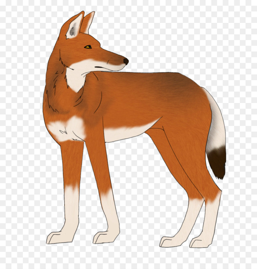 Red Fox Dog Ethiopian Wolf Drawing Dog Png Download 858932
