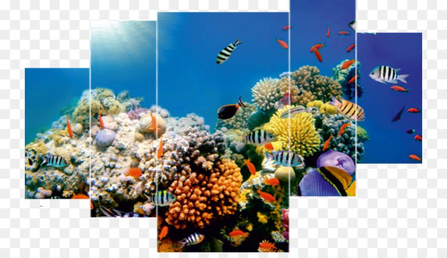 Coral Reef Desktop Wallpaper Underwater Sea Ocean