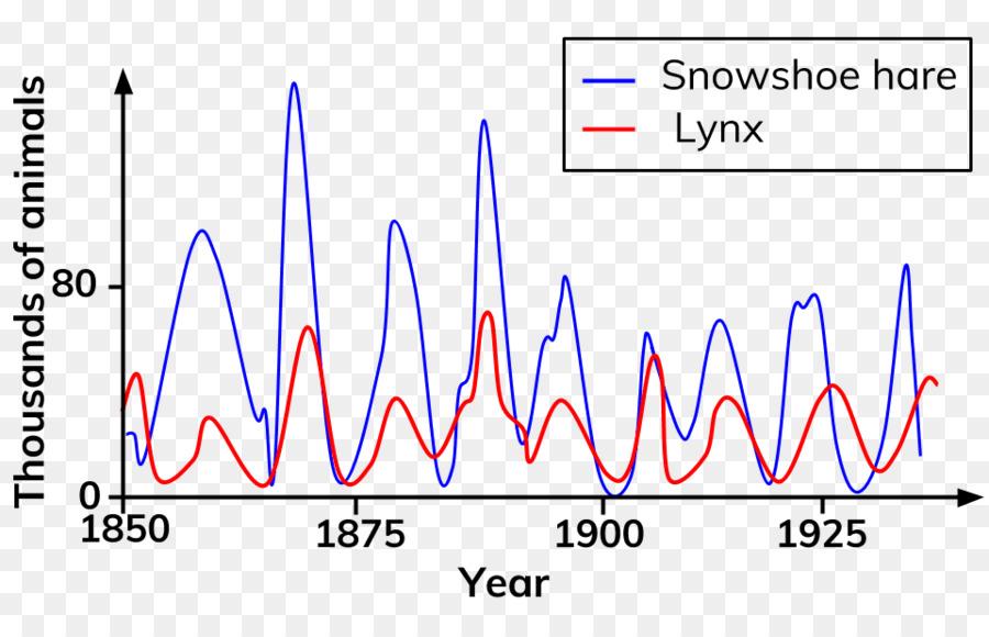 snowshoe hare snowshoe cat canada lynx siamese cat canada lynx png rh kisspng com Lynx Animal Diagram Lynx Running