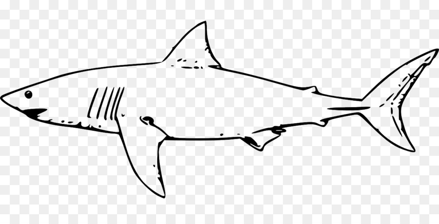 Great white shark Coloring book Sand tiger shark - shark png ...