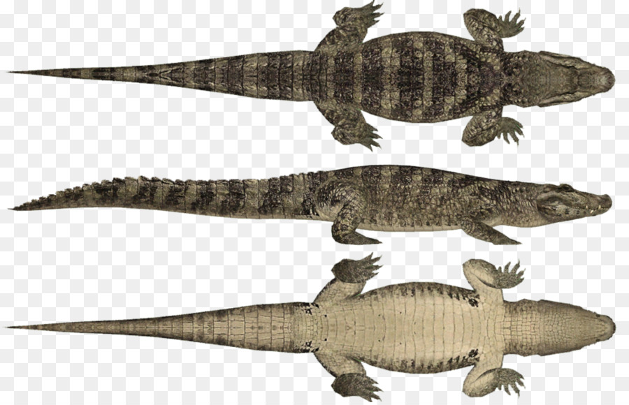 Alligator Cartoon png download - 1104*706 - Free Transparent