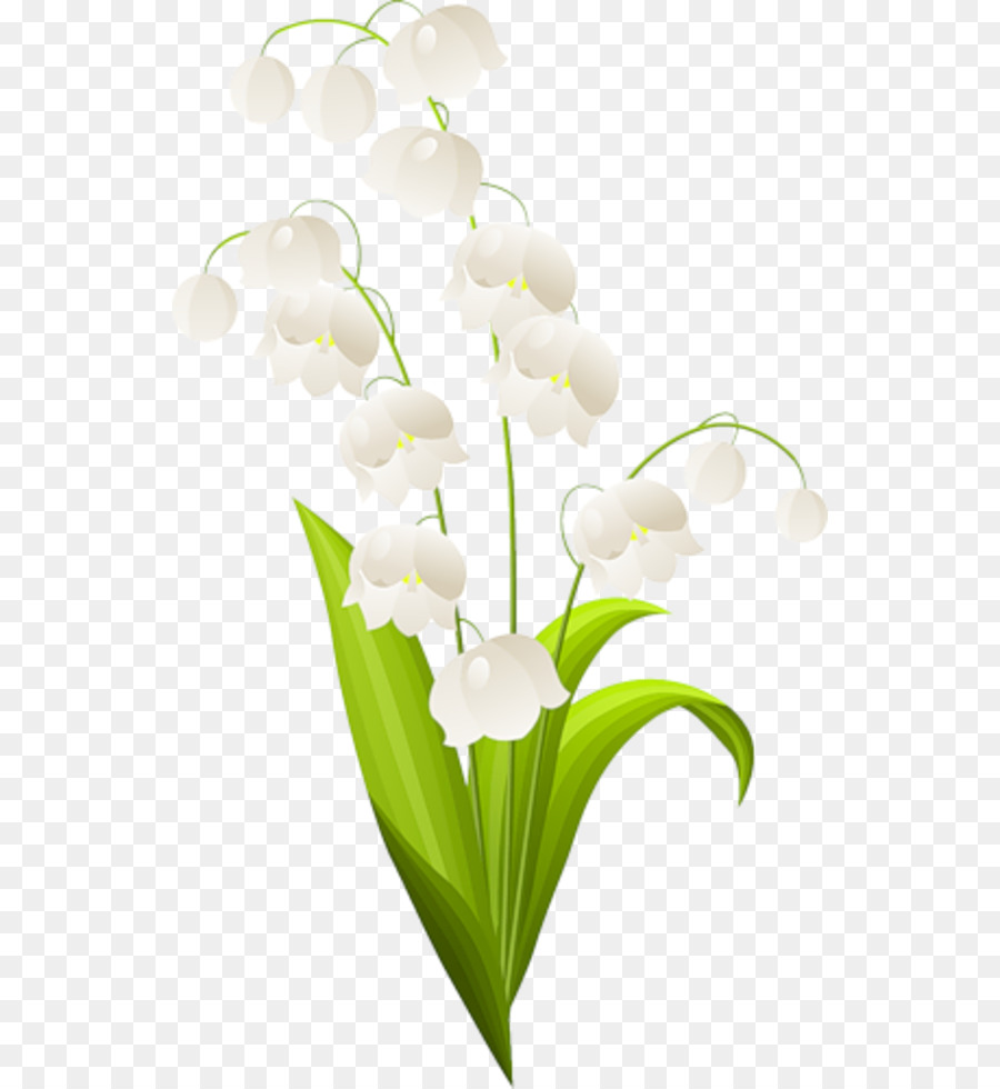Lily of the valley lilium drawing lily of the valley png download lily of the valley lilium drawing lily of the valley izmirmasajfo