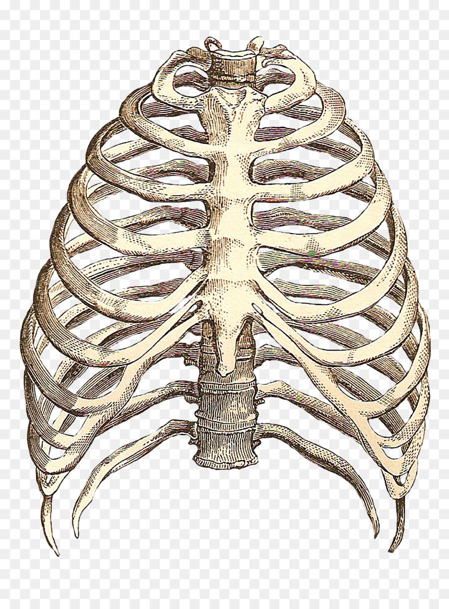 Anatomía del corazón T-shirt esqueleto Humano espacio Intercostal ...